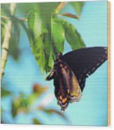 Just Hanging Out - Red-spotted Purple Butterfly Wood Print