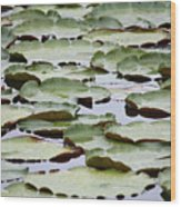 Just Lily Pads Wood Print