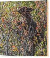 Just Looking For Berries Wood Print