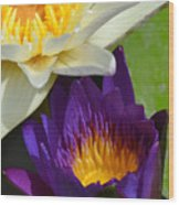Just Opening Purple Waterlily With White - Vertical Wood Print