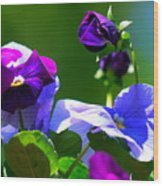 Just Pansy Wood Print