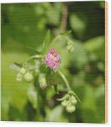 Just  Pink  Wood Print
