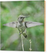Just Spread Your Wings  Wood Print