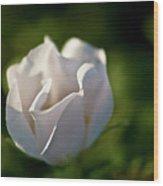 Just White Wood Print