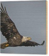 Juvenile Bald Eagle 02 Wood Print