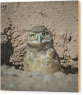 Juvenile Burrowing Owl-img_164817 Wood Print