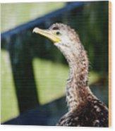 Juvenile Cormorant Profile Wood Print
