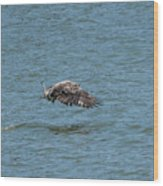 Juvenile Eagle Fishing Pickwick Lake Tennessee 031620161315 Wood Print