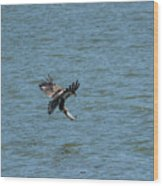 Juvenile Eagle Fishing Pickwick Lake Tennessee 031620161318 Wood Print
