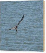 Juvenile Eagle Fishing Pickwick Lake Tennessee 031620161330 Wood Print