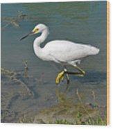 Juvenile Egret Wood Print