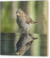 Juvenile House Sparrow 0689 Wood Print