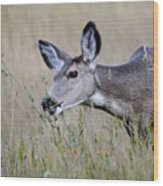 Juvenile Mule Deer Feeding Wood Print