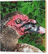 Juvenile Muscovy Duck Wood Print