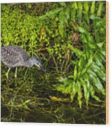 Juvenile Night Heron Wood Print