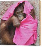 Juvenile Orangutan Wood Print