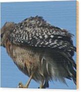Juvenile Red-shouldered Hawk Wood Print
