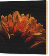 Kaffir Lily Wood Print