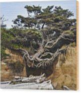 Kalaloch Hanging Tree Wood Print