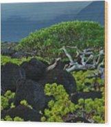 Kalaupapa Beach Scene Wood Print