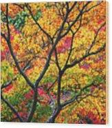 Kaleidoscope Of Autumn Color Wood Print