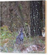 Kangaroo In The Forest Wood Print