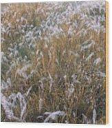 Kans Grass In Mist Wood Print