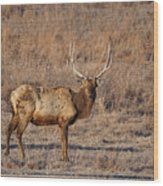 Kansas Elk Wood Print