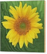 Kansas Sunflower Wood Print