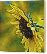 Kansas Sunflower Wood Print