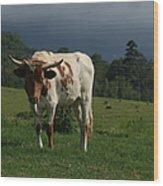 Kapalua Hawaiian Steer Makawao Maui Hawaii Wood Print