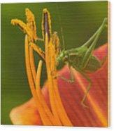 Katydid On Daylily Wood Print