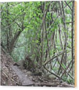 Kauai Forest Path For Secret Falls Wood Print