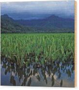 Kauai Taro Field Wood Print