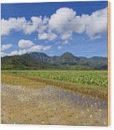 Kauai Wet Taro Farm Wood Print