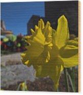 Kayak Launch Daffodil Cambridge Ma Wood Print