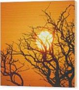 Keawe Tree At Sunset Wood Print