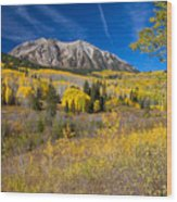 Kebler Pass Gold Wood Print