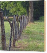 Keeping The Cows At Home Wood Print