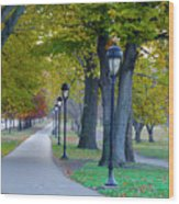 Kelly Drive In Autumn Wood Print