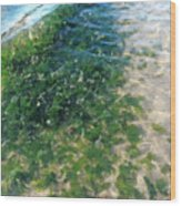 Kelp At Low Tide Line Wood Print