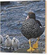Kelp Goose With Goslings Wood Print