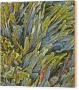 Kelp On A Rock Wood Print