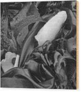 Kelp Point Lobos 8288 Wood Print