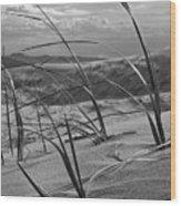 Kelso Dunes Wood Print