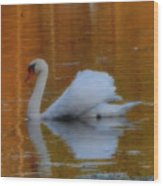 Kensingtons Swan 1  Wood Print