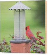 Kentucky Cardinal  Wood Print