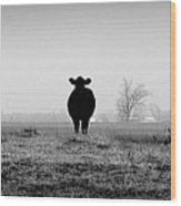 Kentucky Cows Wood Print