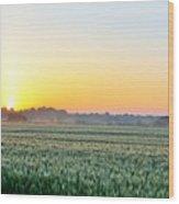 Kentucky Wheat Crop Wood Print