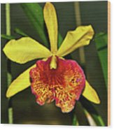 Keowee Newberry Orchid 001 Wood Print